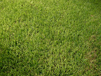St. Augustine grass dutch touch landscaping services