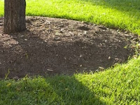 Mulch will slow evaporation of moisture while discouraging weed growth. Adding 2 - 4 inches of organic material such as compost or bark mulch will increase the ability of the soil to retain moisture.