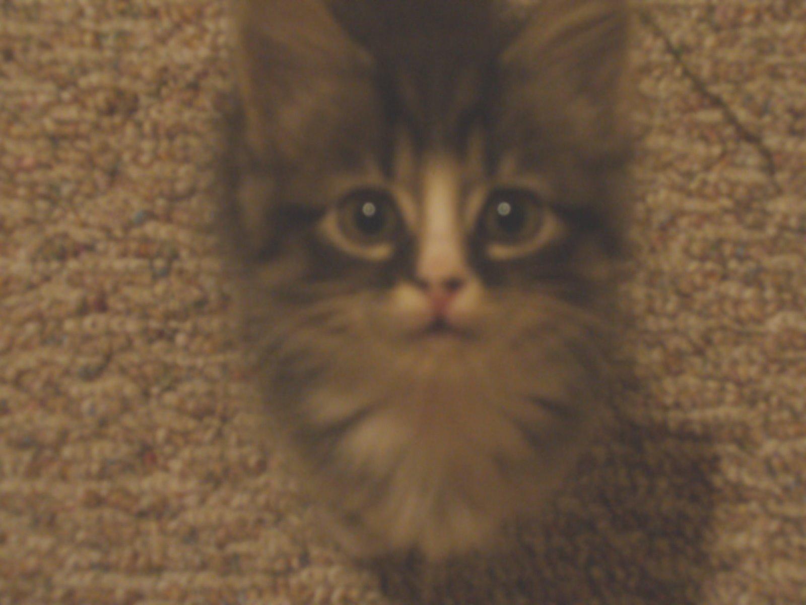 [kitty+8.jpg]
