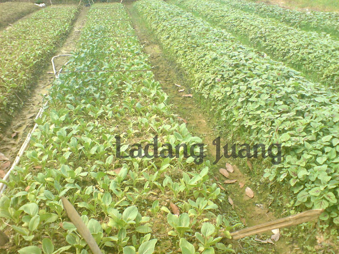 Kebun