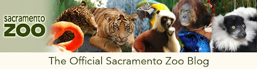 The Official Sacramento Zoo Blog