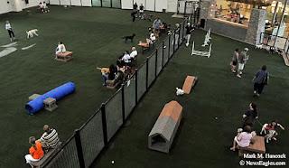 PhotoJournalism: Unleashed Indoor Dog Parks