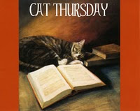 Cat Thursday (3)