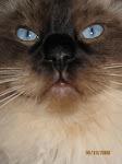 Mina goa katter