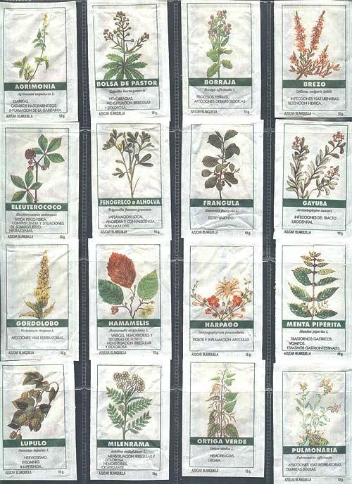 Imagenes de plantas medicinales y sus nombres imagui Nombres de plantas comunes