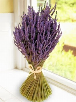 Lavender List of plants