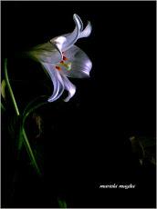 monday's flowers