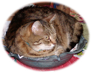 cat in fruit bowl