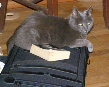 sparkey on Lee's suitcase