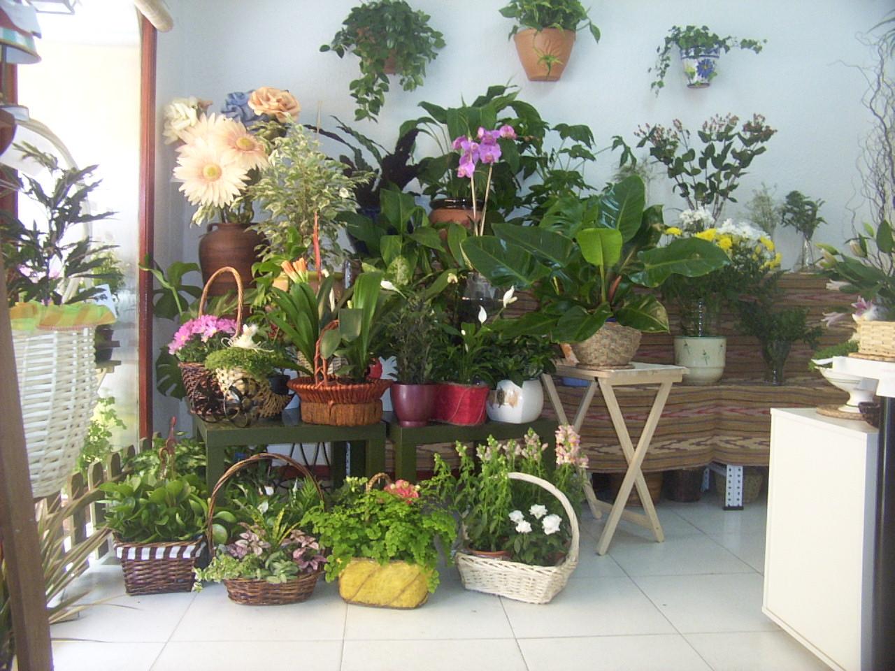 Las plantas Las plantas ornamentales