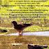 Prem Rawat Maharaji YPI- Breath