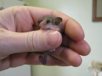 Smallest cute animals - photo#2