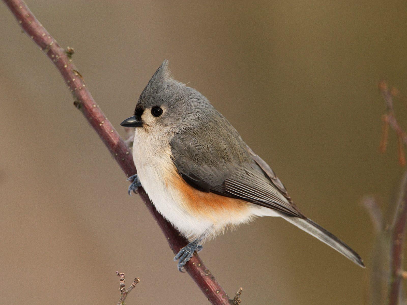 BEAUTIFUL WILD ANIMALS: Birds Wallpaper
