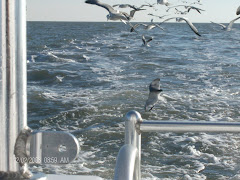 Seagulls on our stern