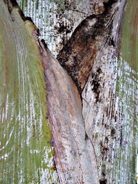 Natureza abstrata 1
