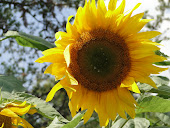 Be like a Sunflower, TURN your Face to the SON!
