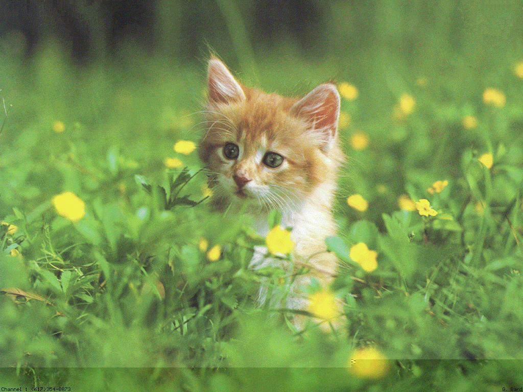 ركني الهاديء1 - صفحة 2 CAT