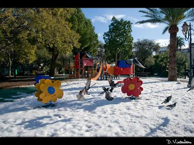 Vincendeau blog antibes sous la neige le jardin aux pigeons for Antibes le jardin