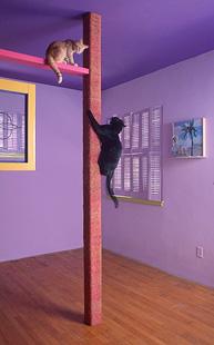 Construir un super rascador trepador con pasarela - Trepadores para gatos ...