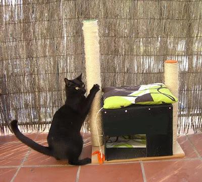 como construir un arbol para gatos