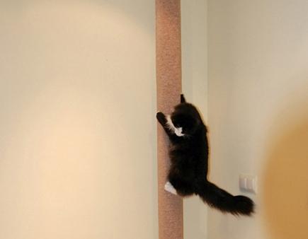 C mo hacer un rascador trepador de suelo a techo - Trepadores para gatos ...