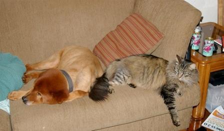 Consejos para introducir un perro en una casa con gatos - Perros para tener en casa ...