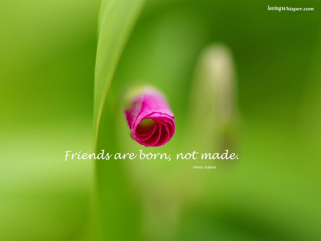 http://4.bp.blogspot.com/_89YGK08dMfY/TOuferTQp1I/AAAAAAAAAEE/_Gsym9doXhc/s1600/47987-friends-are-born.jpg