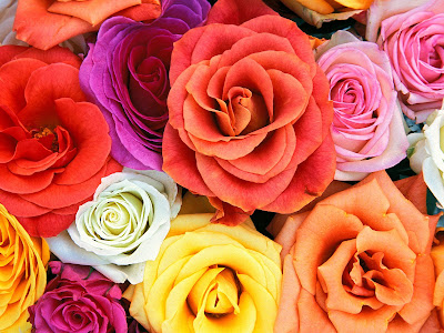 i love u rose wallpaper. roses wallpaper. Do u like