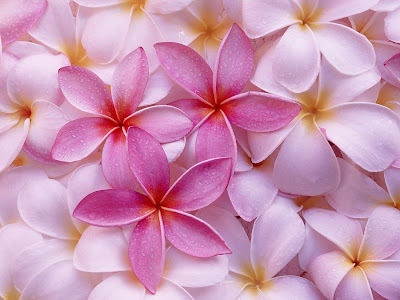 Flowers Wallpapers part 10