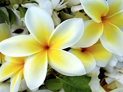 These are plumerias. It's my favorite flower. Flower tattoo designs are