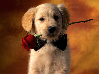 free puppy wallpaper. Free Wallpapers Download: Dogs