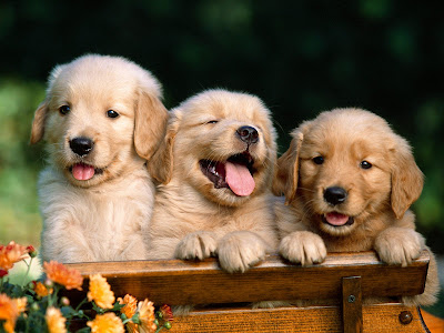 wallpaper of puppies