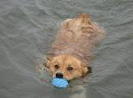 I'm a swimmer!