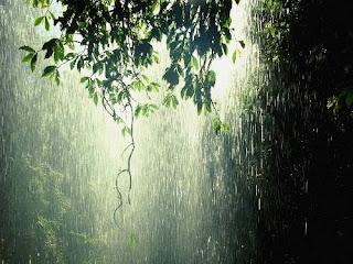 orman , yağmur , forest , rain