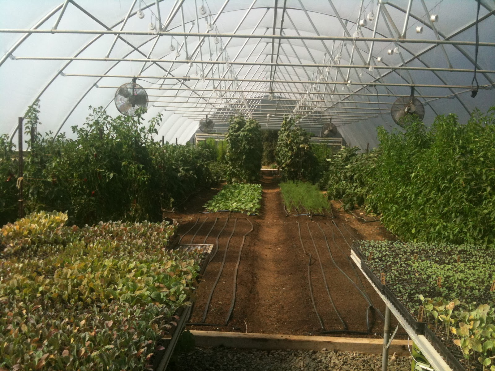 The Potager Advocate: The French Laundry Potager