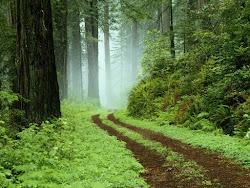 Había dos caminos, elegí el menos transitado  y entonces  todo el recorrido fue diferente.