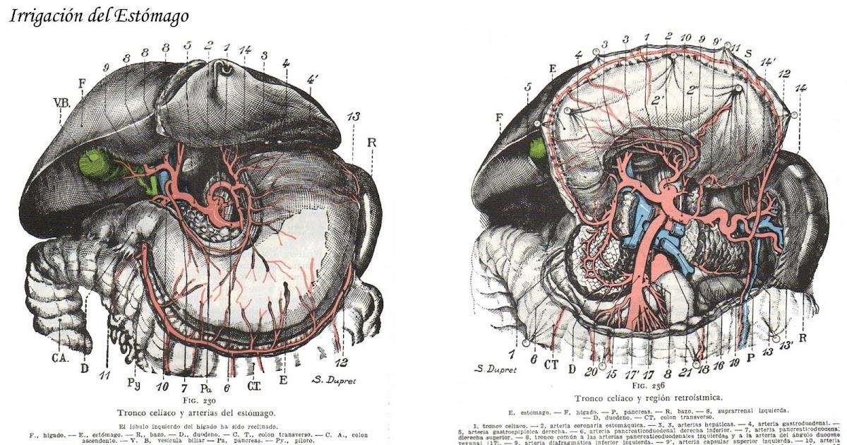 Anatomía Normal: Irrigacion de estómago