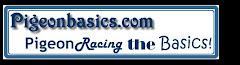 Pigeonbasics.com