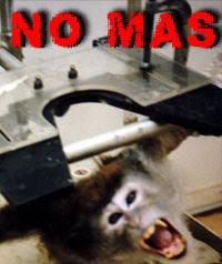 vivisección