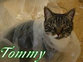 Katzenpersonal Kleeblatt von