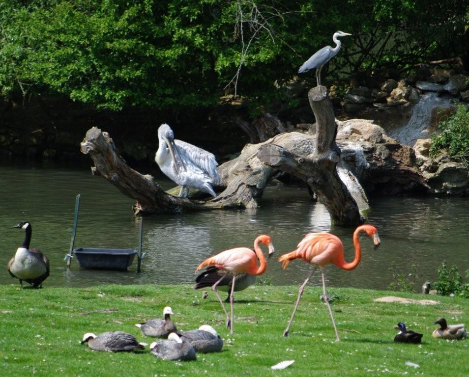 La blogazette des ulis et du hurepoix ch teau de for Parc animaux yvelines