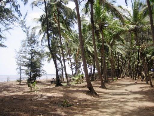 Arnala Beach Resort Address