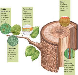Biologia for Botanica general pdf