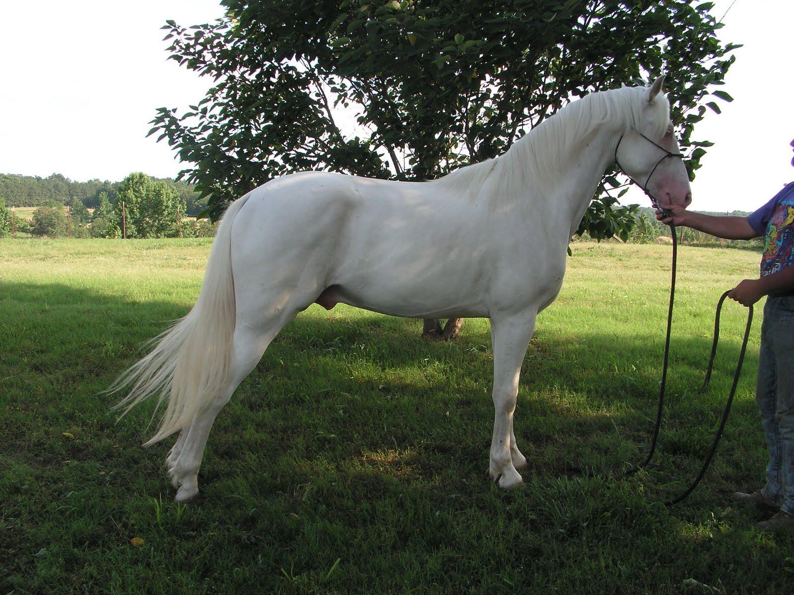 Standing White Horse