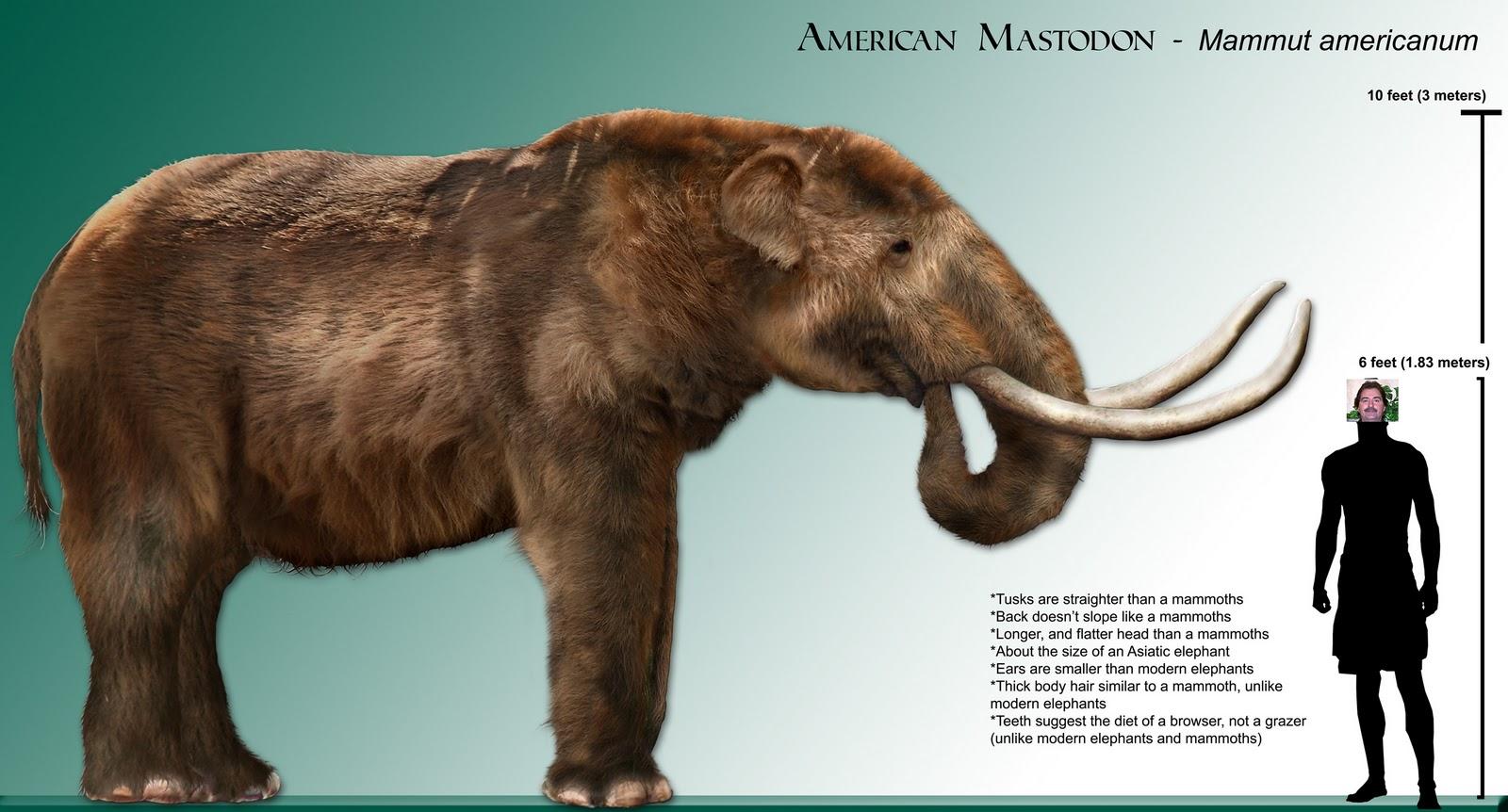 http://4.bp.blogspot.com/_8IcO1ehweFs/TP1ULlawsTI/AAAAAAAAFYo/Gm5f74DuzXw/s1600/mastodon_rendering-1.jpg