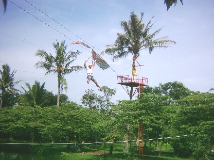 Flying Fox  Tirto Arum Baru