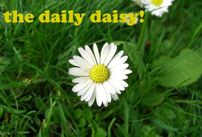 the daily daisy!