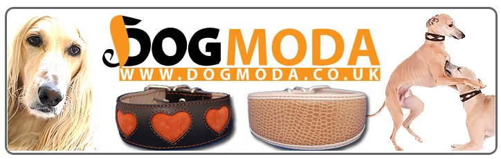 DOG MODA news & views