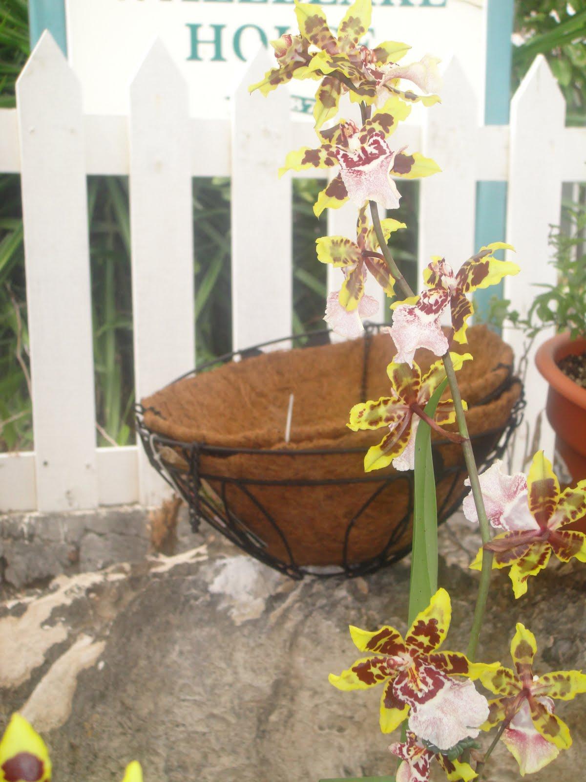 Garden Fair | A Caribbean Garden
