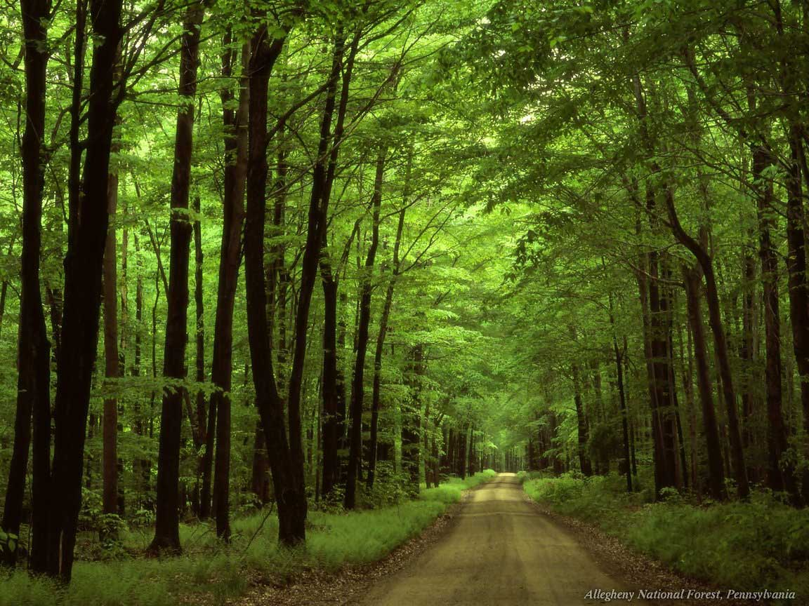 PEACE OF MIND: BEAUTIFUL NATURE WALLPAPERS: Forests.